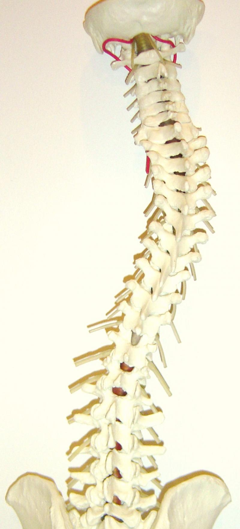 Mejor Colch N De Almohada Para El Dolor De Espalda ~ Los Mejores Colchones Para La Espalda